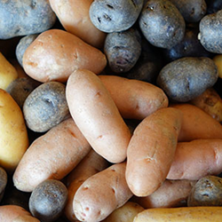 Potato farmers are growing and expanding market share with updated agricultural research for 2016 from Wise Business Plans
