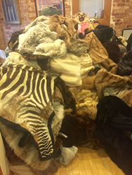 Over 750 pounds of fur donated to Born Free USA will go to support orphaned and injured wildlife.  Photo: Born Free USA