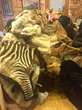 Nearly 400 Fur Items -- Representing Approximately 12,000 Animals Killed -- Donated to Born Free USA to Support Orphaned and Injured Baby Wildlife