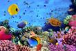 Sansone Companies To Bring Sea Quest Aquarium To New Boulevard Mall