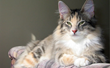 "Katzenworld: New Guide Released ""A Guide to Arthritis in Cats"""