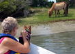 Wild horses are often seen in Beaufort Harbor