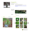 PlantsMap.com makes it easy to manage your plants and order garden labels.