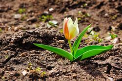 Early Spring Landscape Advice