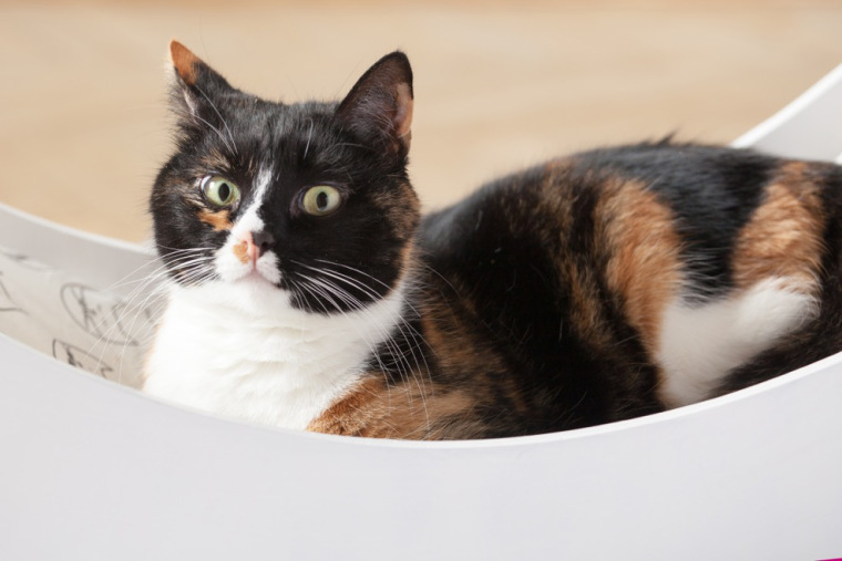 how to clean cat spray odor