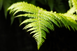 Fern fractal reflect pattern metaphor jesus relationship with god