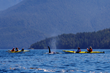 Adventure Travel Company Offers Ultimate Orca Experience This Summer