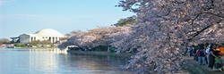 National Cherry Blossom Festival Parking
