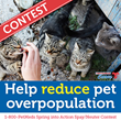 1-800-PetMeds® Spring into Action Spay/Neuter Contest to Grant $4,000 to Reduce Pet Overpopulation