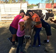 Children interacting with cow at The Gentle Barn