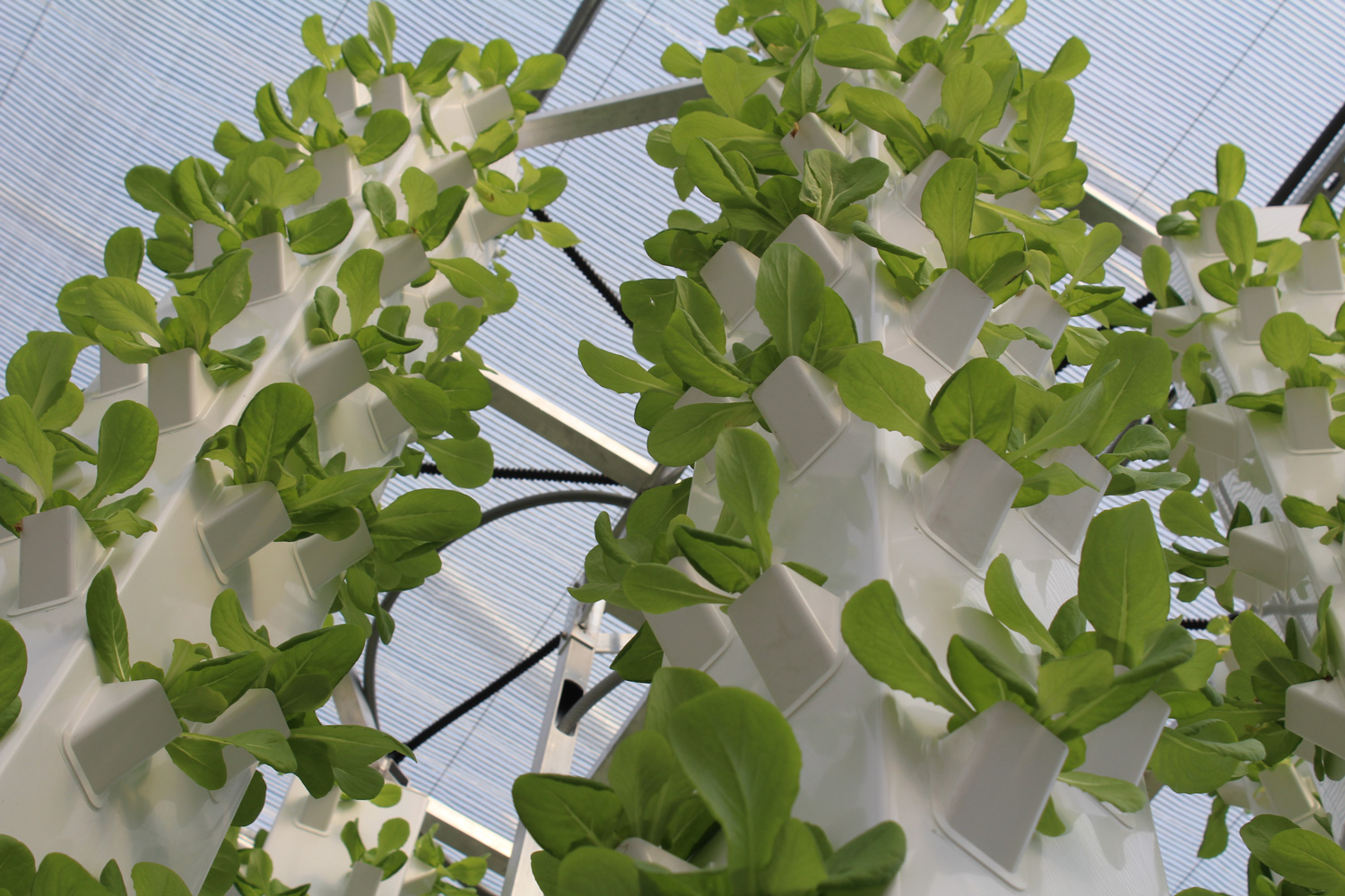 Aeroponic System Brings Year Round Fresh Vegetables To