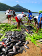 French Polynesia's Austral Islands Propose New Marine Reserve