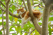 cat-asleep-in-tree.jpg