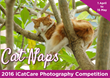 Katzenworld: Opening of the International Cat Care Annual Photo Competition