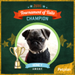"""Dogs Rule"" in Petplan Pet Insurance's Tournament of Tails Bracket"