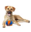 Cowboy, NKLA Pet Adoption Center