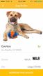 Cowboy Profile on Bark'N'Borrow