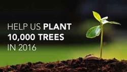 Help WoodMafia plant 10,000 trees in 2016