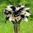 Calla lilies, like 'Night Cap' with its black flowers and the white blooms of 'Crystal Clear,' are spring planted bulbs that thrive in full sun or part shade and can be cut to create an elegant displa