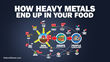 PristineHydro™ Offers Industry Tips on How to Avoid Heavy Metals Ending Up In Food