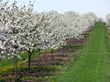 Experience the Season of Blossoms in Door County, Wisconsin this Spring
