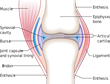 Study on Knee and Joint Health Points to Restorative Nature of Bariatric Surgery, Notes Dr. Feiz & Associates