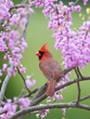 Visit the Perky-Pet®  Learning Center to find out about the birds in your neighborhood.