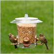 Visit birdfeeders.com to find the best food for your backyard birds.
