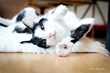 Katzenworld Posts New Report on the Opening of Seattle's First Cat Cafe