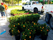 FirstService Residential Helps Enhance a Local Community by Organizing the Distribution of Over 500 Plants