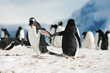 Menguin tuxes help save marine wildlife like penguins