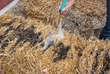 Garden Anywhere This Season With the Help of Straw Bale Gardening