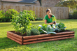 Raising planting beds at least 8 to 12 inches improves drainage in raised bed gardens. Photo credit: Bonnie Plants