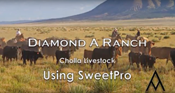 Diamond A Ranch, SweetPro, Cholla Livestock