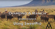 Diamond A Ranch Using SweetPro® Cattle Blocks To Be Ready For Droughts