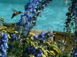 Nonprofit guests of the Antlers at Vail will enjoy spring in Vail, Colorado, including flowers in bloom around the hotel's year-round outdoor swimming pool.
