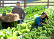 Yield a Bountiful Harvest This Season with Low Maintenance Vegetable Gardening