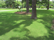 Now Available From NG Turf: TifTuf™ Bermuda Grass – The World's Most Sustainable Drought-Resistant Turfgrass Sod