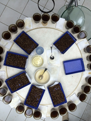 Cupping Table in Guatemala