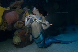 Mermaid at Silverton Casino