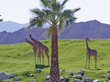 Brad Schmett Announces Endangered Species Day At The Living Desert Boosts Family Home Sales