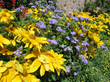 Get Back to Basics and Enjoy Low Maintenance Flower Gardens This Season