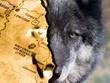 WERC teaches ecology and biology about wolves