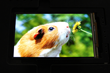 Tianma NLT USA Announces 5.5-inch TFT-HD AMOLED with On-Cell Touch Technology