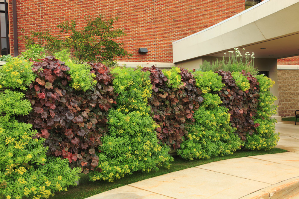 Unique Two Sided Livewall Green Wall Welcomes Patients And