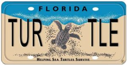 The Florida Sea Turtle License Plate funds the grants program.