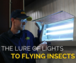 McCloud Services Provides Light Management and Exclusion Tips for the Most Common Light Invading Insects Found Inside a Food Warehouse or Food Plant
