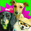 Dogs Compete to Become the Next Online Bingo Game Star for Dog Bingo™