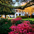 As The Masters Nears, Azalea Package Puts Golfers On Three Championship Courses That Feature Spectacular Blooms Like Those In Augusta