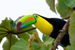 David Attenborough Has Revived Interest In Jungles, And Chaa Creek Wants To Show You Belize's